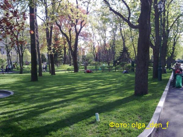 Газон у парку 4