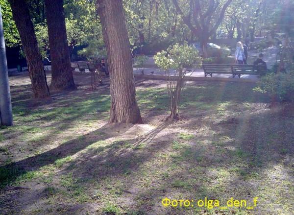 Газон у парку 6