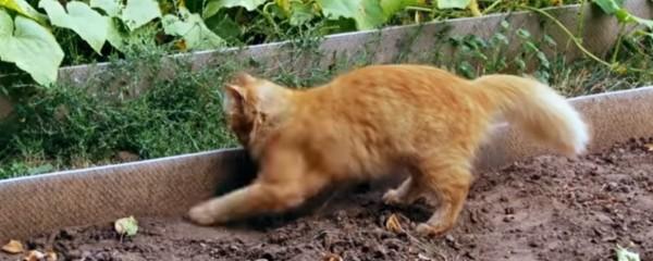 Кіт зариває