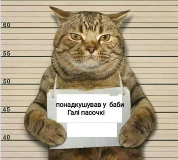 Кіт 1