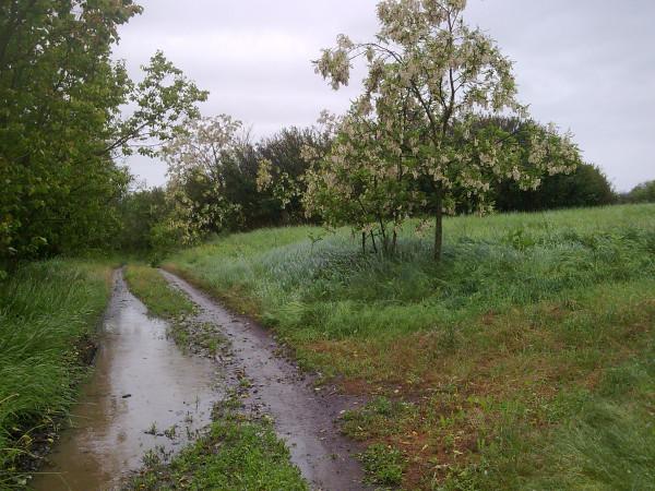 Дощ ішов другий день.