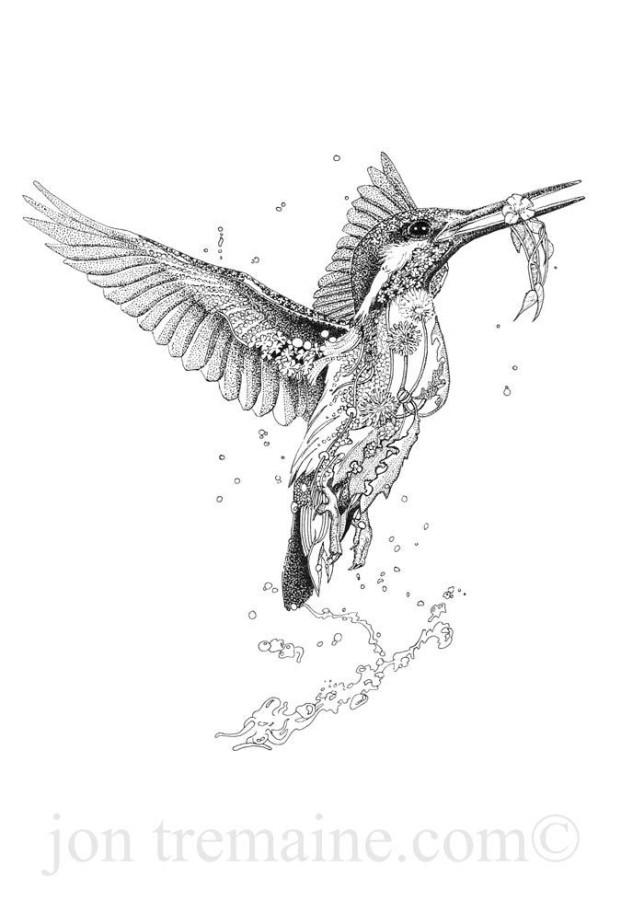 Portrait Kingfisher Ltd