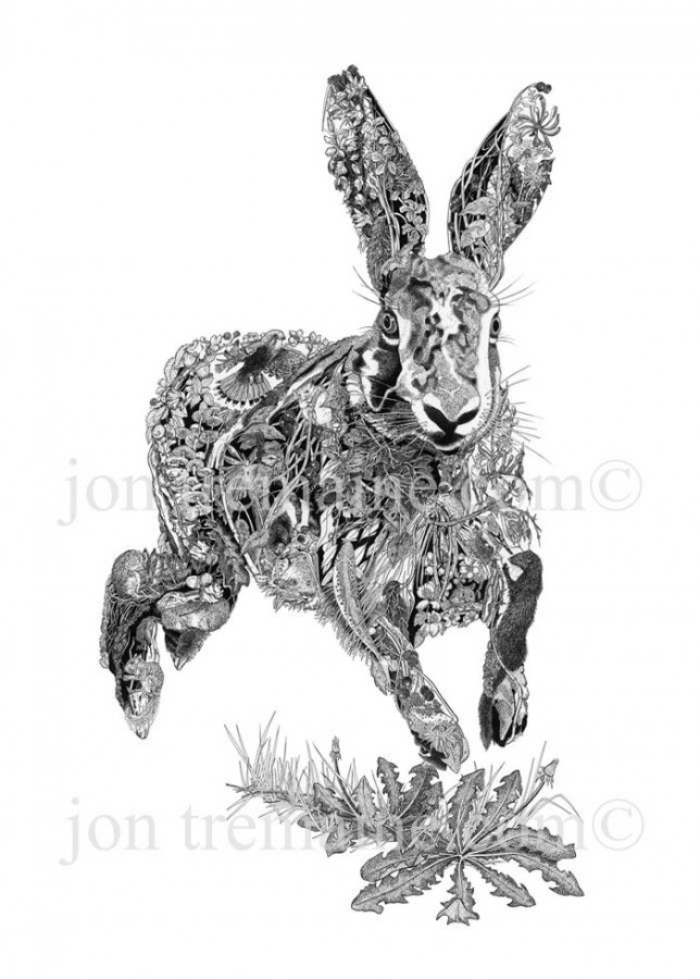 Portrait Ltd Hare 02