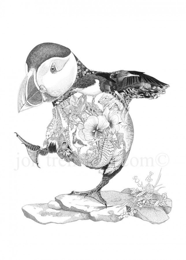 Portrait Ltd Puffin