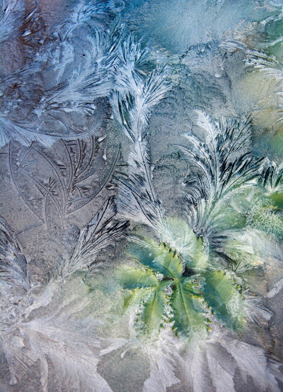 Image-through-Icy-Glass-by-Carol-Casselden-159369
