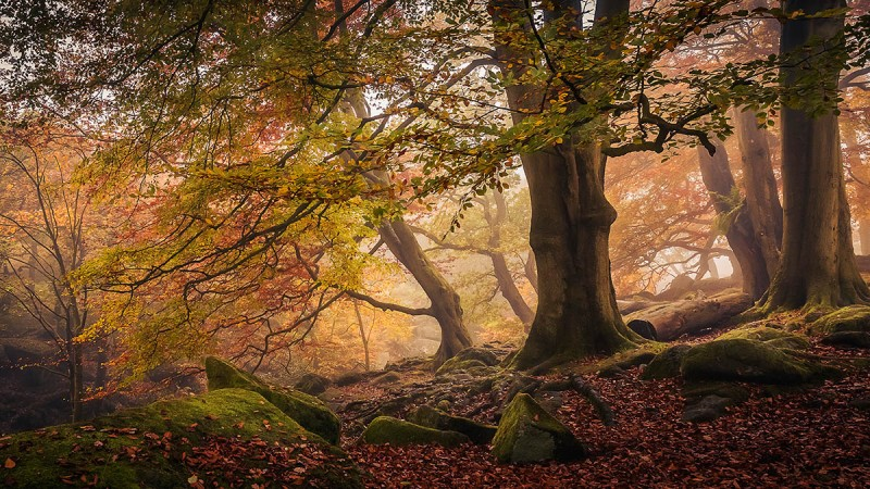 Autumn-in-Padley-Gorge-by-Dave-Fieldhouse-161245