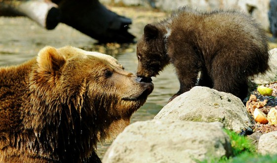 bear_mother