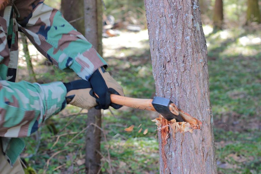 В Кандалакше пенсионер из Краснодара незаконно вырубил деревья