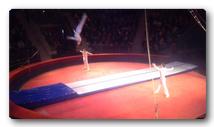 Дорожка Sport в цирке