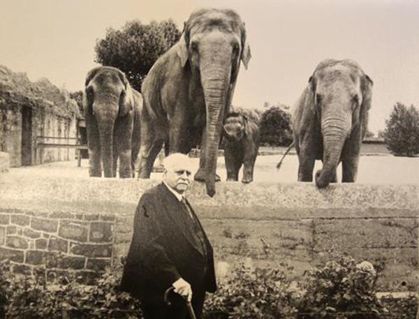 Zooelephants