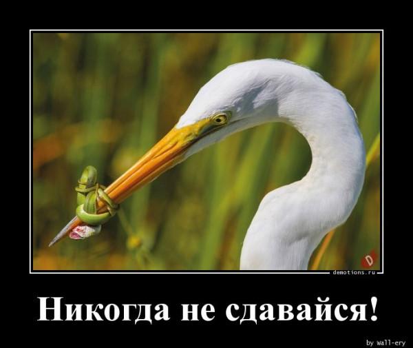 1564767810_Nikogda-ne-sdavaysya_demotions.ru