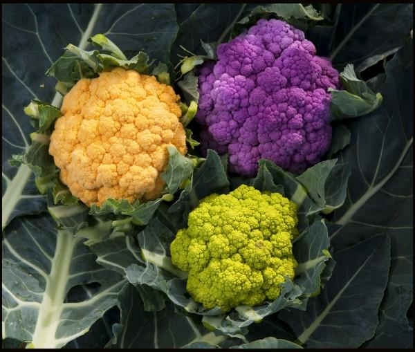 цветная цветная капуста