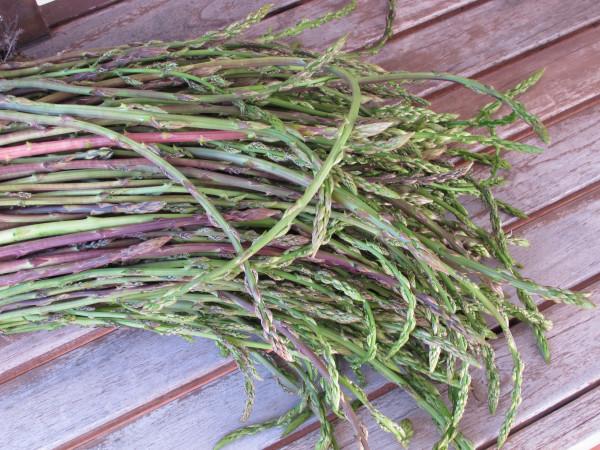 wild-asparagus-bunch-17-4-13