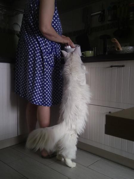 котик хочет есть