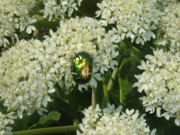 19 майский жук