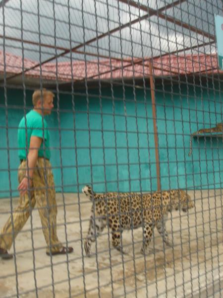 27 у леопарда Самсона