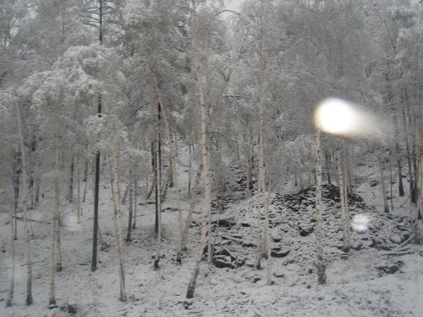 9 Сказочный лес