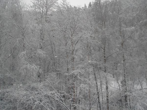 11 Сказочный лес