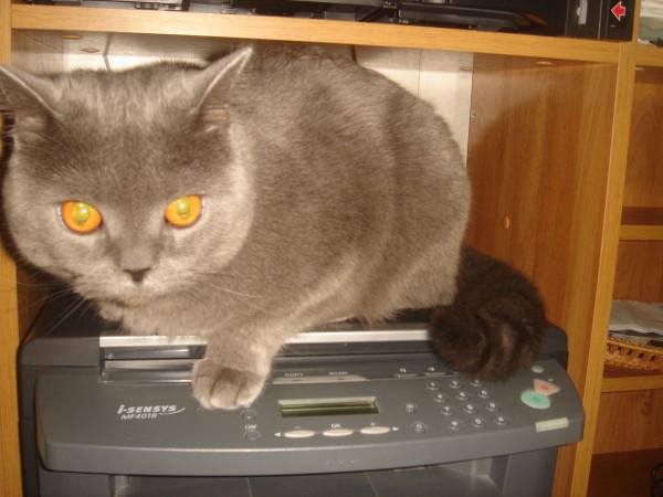 15 на принтере