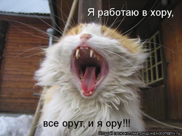 кот рычит