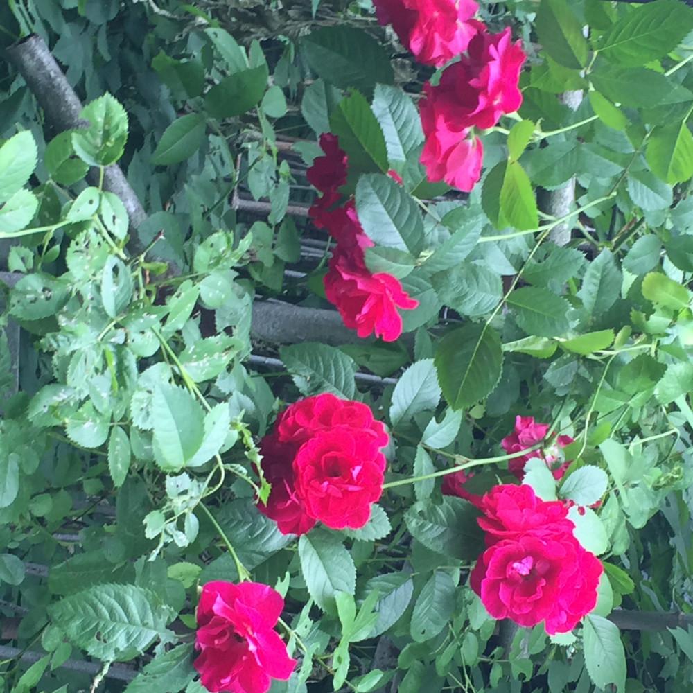 Цветы дают энергию...