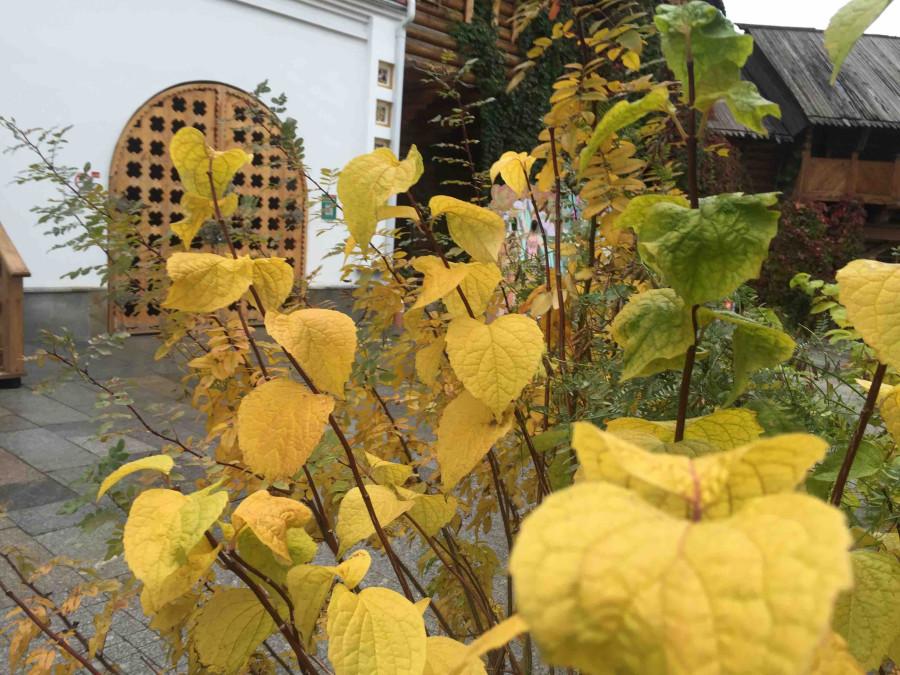 Осень в Измайловском Кремле