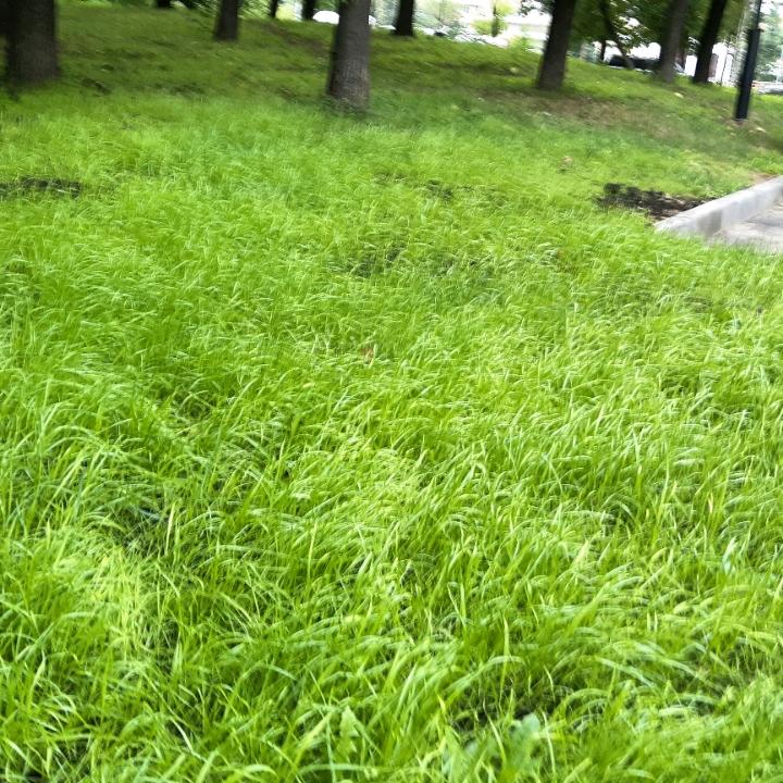 Трава мурава фото кухни