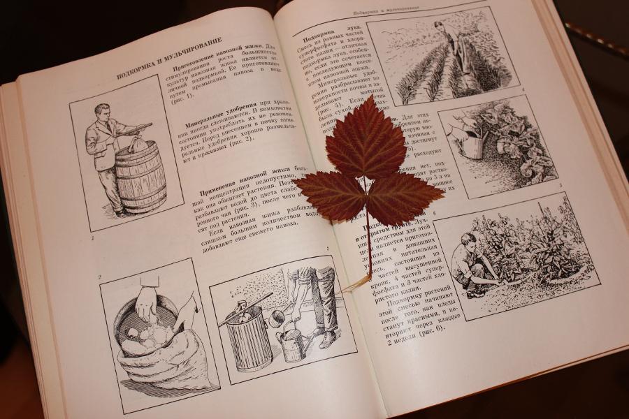 autumn6_1.JPG