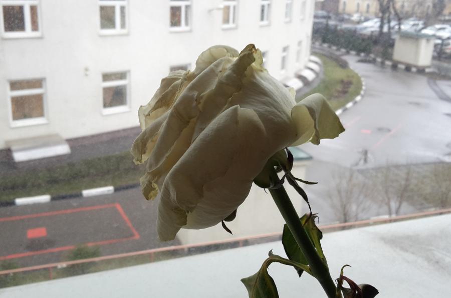 belroza1_1.jpg