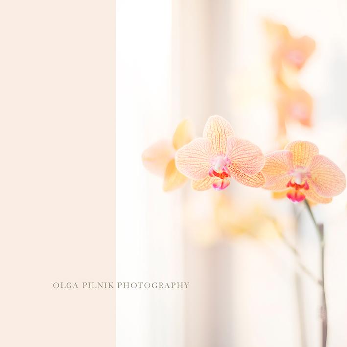 OLGA-PILNIK-PHOTOGRAPHY-_-flowers_01