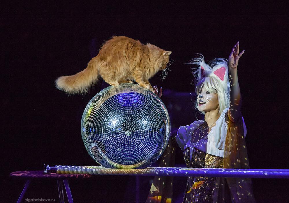 Сон цветном волшебный цирк на
