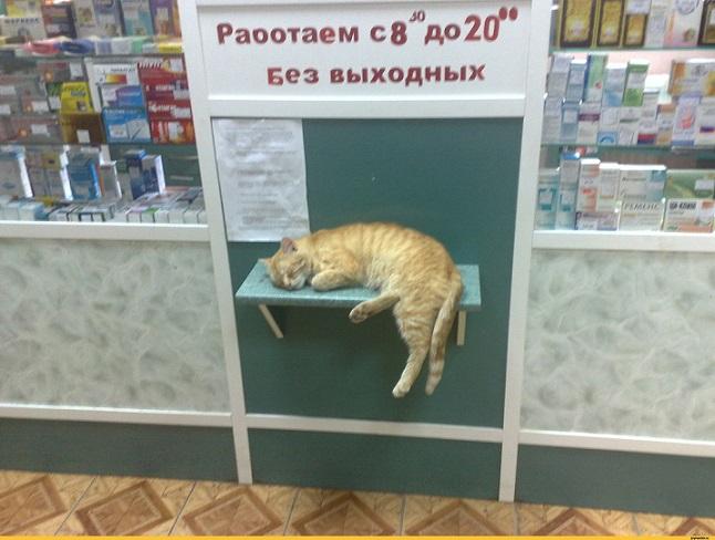 В аптеке картинки смешные