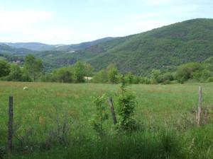 окрестности деревни2