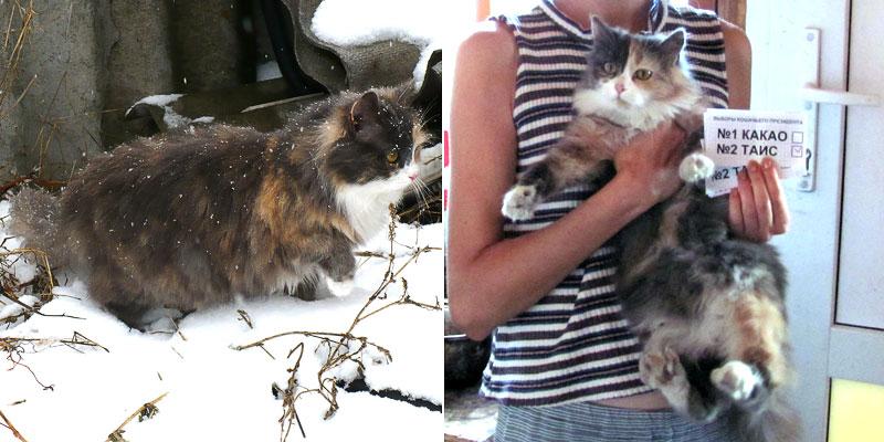 Кошка Таис