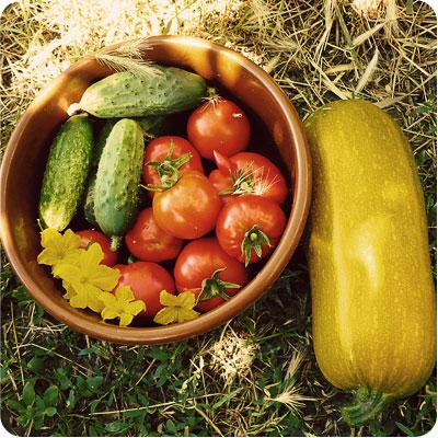 Первый урожай овощей - 2013