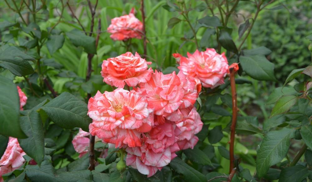 Цветы июня