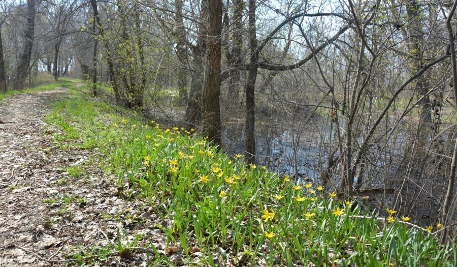 цветы апреля