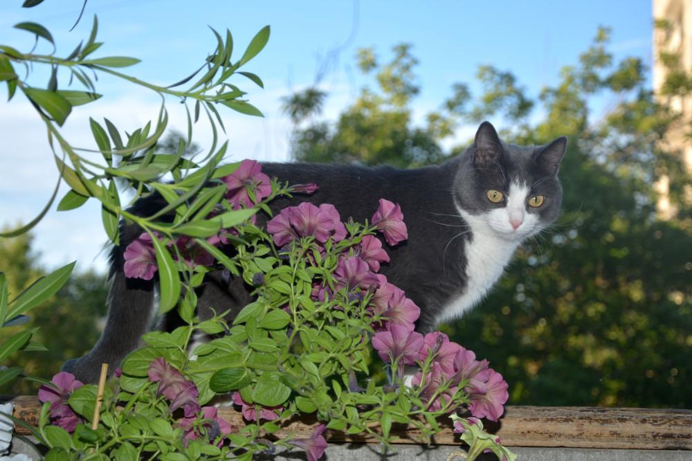 Нюша у нас на балконе