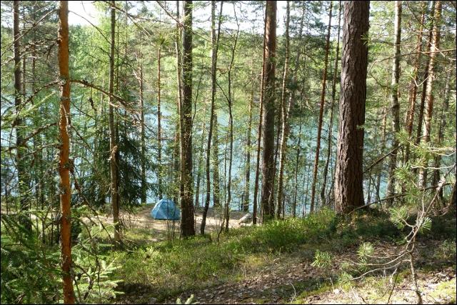 Вид из леса
