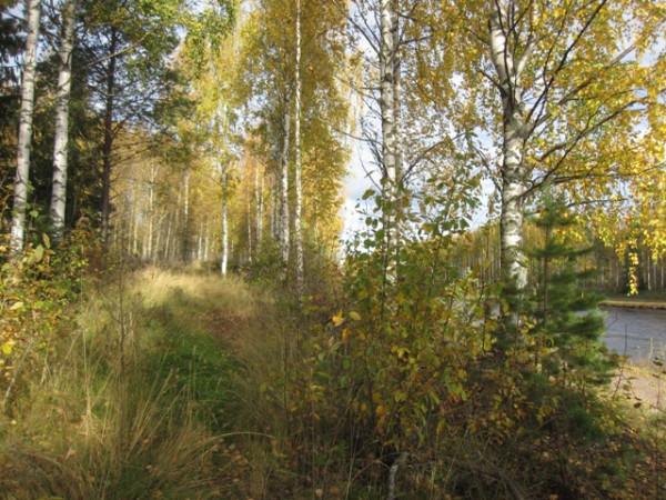 осень в солнечном лесу