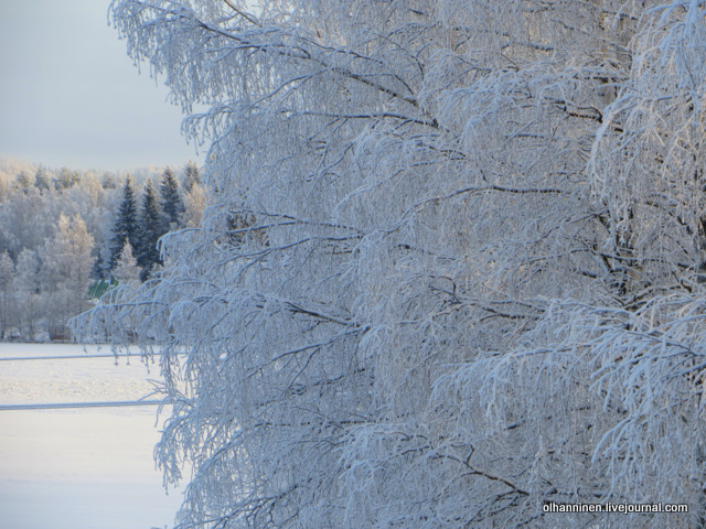 01 зимняя красота