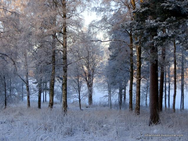 07 зимний лес