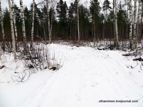 14 снег не прикрыл даже кочки в лесу