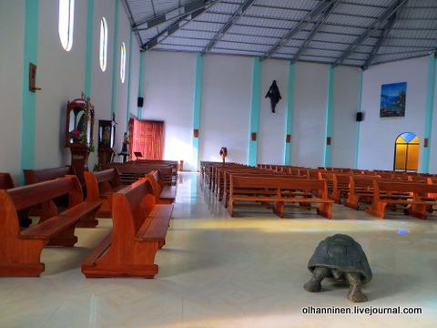 08 витражи и фигурка черепахи в центре церкви у алтаря