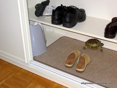 черепаха залезла в шкаф на коврик