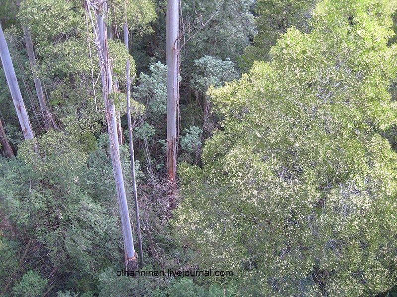 А внизу были те же самые эвкалипты, что и там, где жила коала Маруся