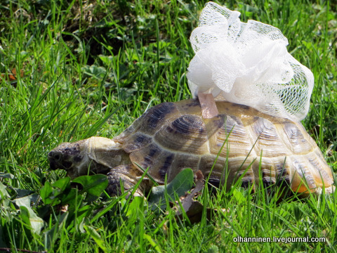 03 самка кушает листочки
