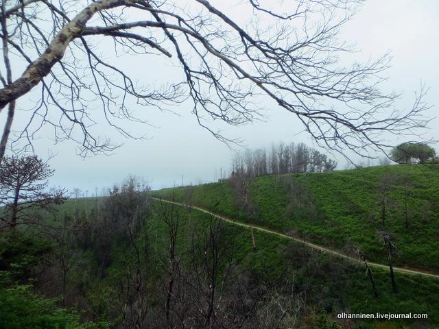 01 призрачные сгоревшие леса