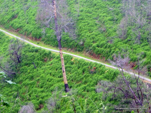 08 выгоревший лес вдоль левады