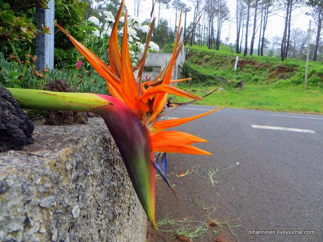 08 цветок попугай и разрушенный дом